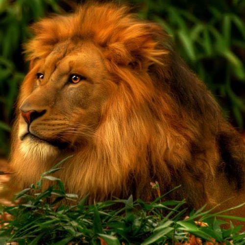 Greener Grass (Lion Circus)
