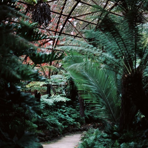 Rippon Lea Fernery Sound Immersion Experience