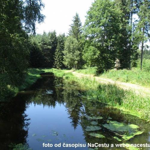 Perličky od vody - Lužnice - Stará a Nová řeka