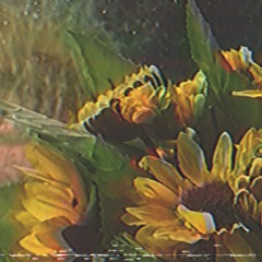 Capri Sunflower (prod. Lucas Müller, Abraham)