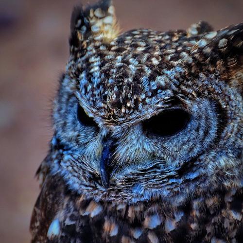 Lil Owl - Weekdays