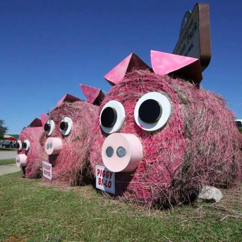 GreenvilleTressle PigPickin 2019