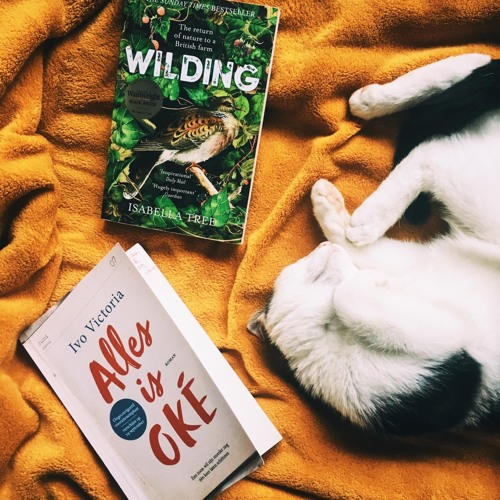 #66 De Bende, wilde dieren en Alles is Oké