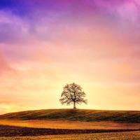 Elder Tree (432 Hz) | Dreams, Deep Meditation, Creativity | Theta Wave Binaural Beats Music