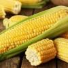 Download La presencia de aminoácidos en vegetales Mp3