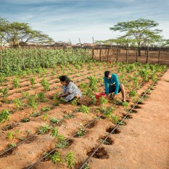 FAO Podcast - Building resilience on Colombia's border