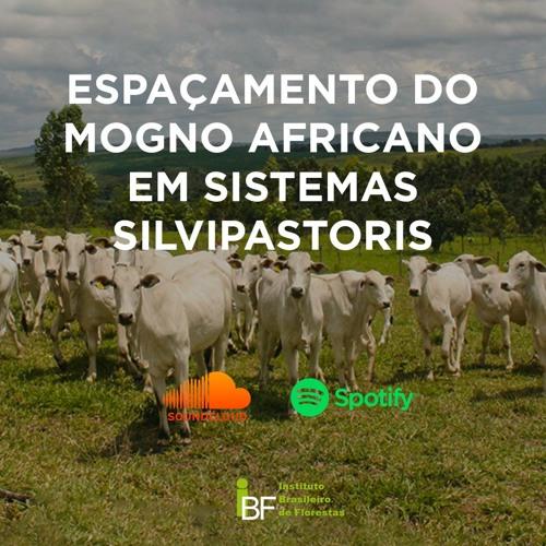 Podcast - Espaçamento do Mogno Africano em Sistemas Silvipastoris