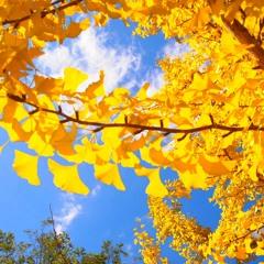 黄蘗色の風