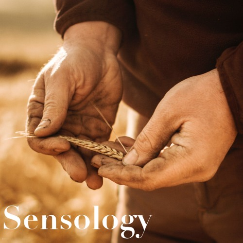 Sensology