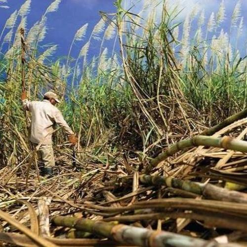 Decreto que autoriza plantio de cana 'abrirá as portas do inferno' na Amazônia