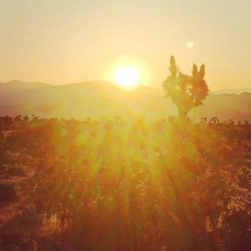 Alex Tolstey (Boshke Beats)live set recorded in Joshua Tree 2018 pt. 1