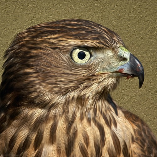 Funky Falcon