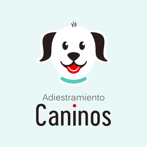 7 consejos para empezar la educación de un cachorro