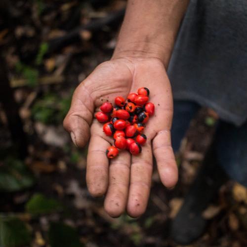 Carnets d'Amazonie - Le Pérou d'Aquilés
