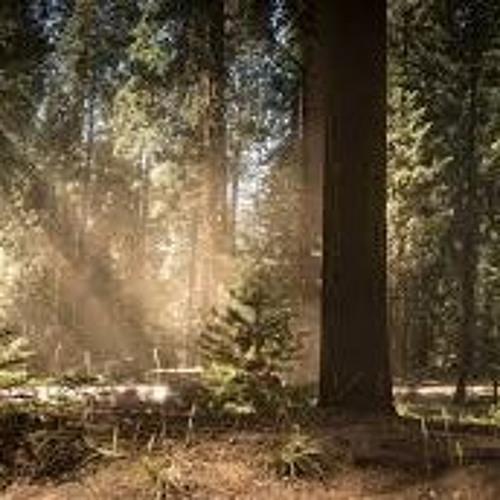 Le Sequoia (extrait) reprise de Géraline Torres