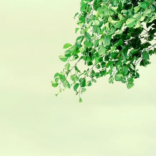 Sapper's Tree