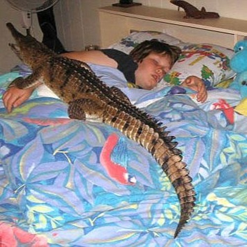 Do you Dream is Exotic Pets? Vealove