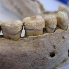 391 - Les dents de la mort, avec Perrine Munaro
