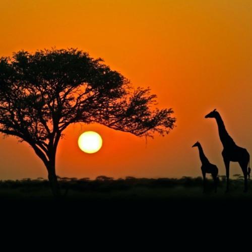 NaimZ-Safari(Youtube Now)