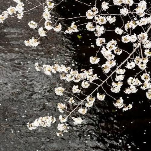 桜 /Janne Da Arc(cover)
