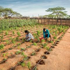 Crear resiliencia en la frontera de Colombia
