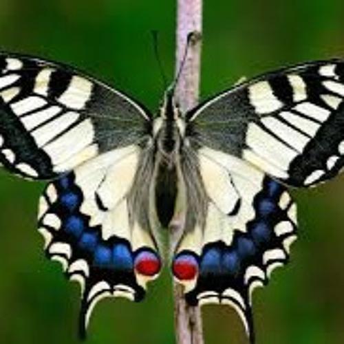 butterfly(prod.ams)