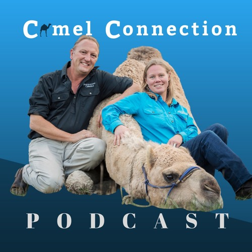 Camel Q&A - How Much Water Does A Camel Drink?