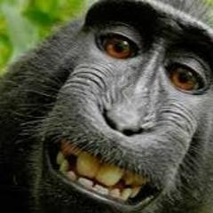 Trap do macaco