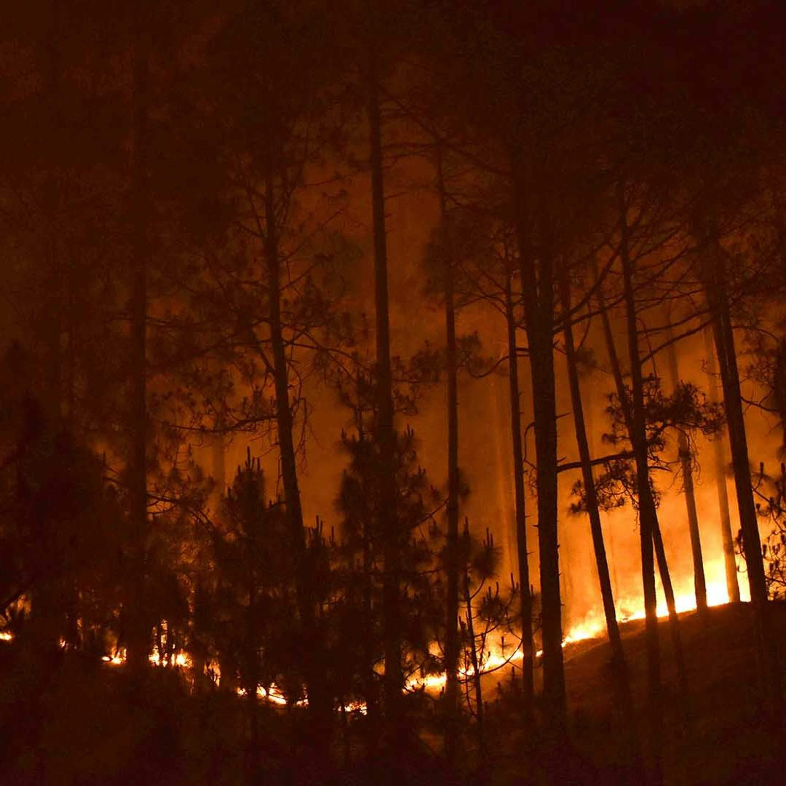 Ep. 41: India's Battle to Control Forest Fires