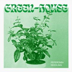 Green-House - Peperomia Seedling