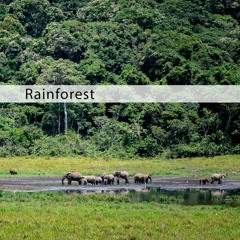 MAFX017 African Jungle demo