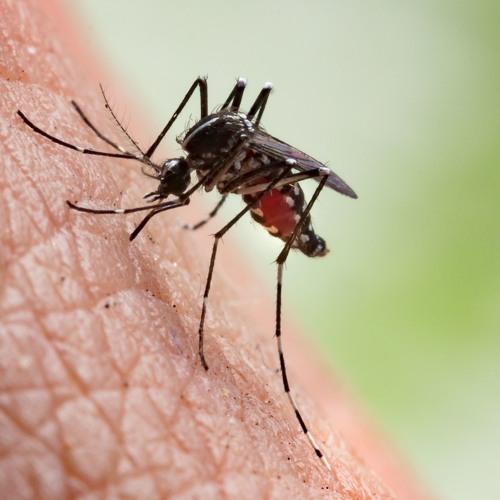 Mosquito saliva and its enhancing effect on arboviruses