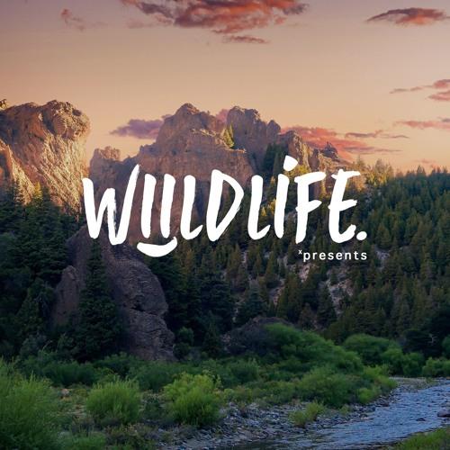 Life is a Safari 001
