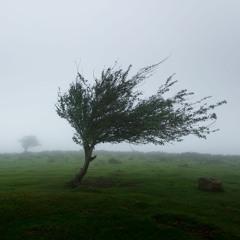 Windy Morning - Piano Improvisation