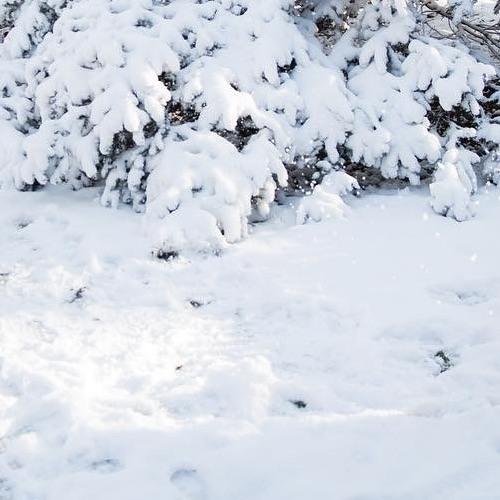 frozen in snow