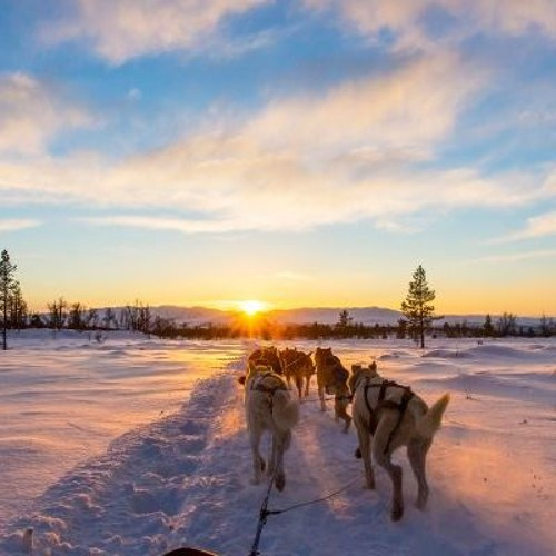 Abenteuer Lapland - Husky Tour des Lebens