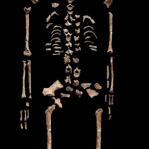 Cold Case der Archäologie gelöst – Makro Mikro #4