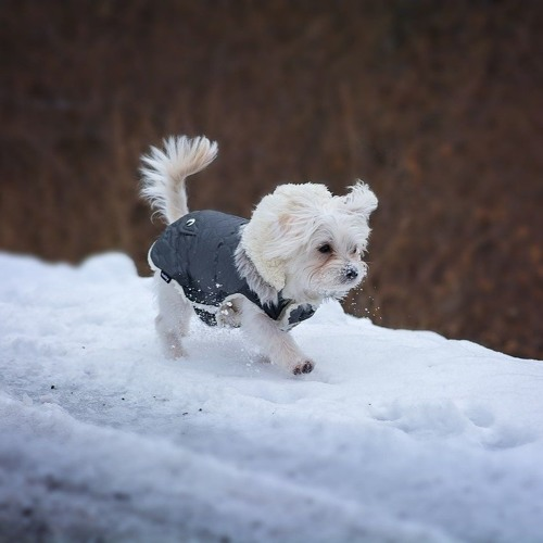 Caring for pets during cold weather
