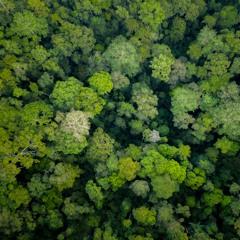 Borneo 2020