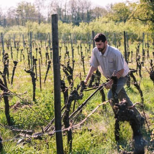 Philippe Brand ; Vigneron et créateur de vins biodynamiques