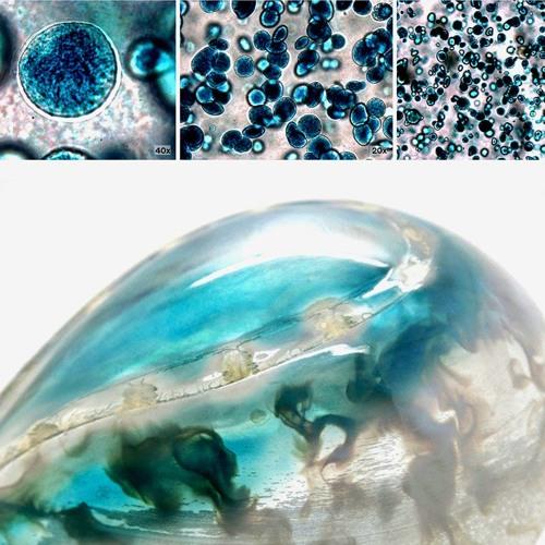 Audio Explainer: 3D bioprinting and biohyrbid materials
