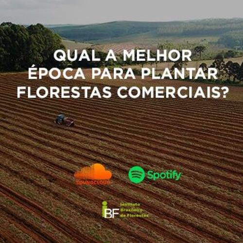 Podcast - Qual a melhor época para plantar florestas comerciais?