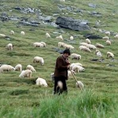 Immanuel's Band: A Portrait of True Shepherds and Their Flock (Acts 20:17-38)