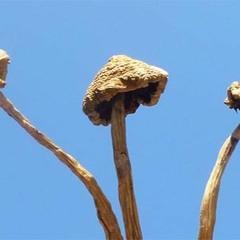 The Mushroom God🍄