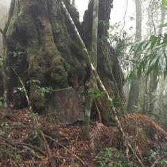 Gondwanan Forest Awakens