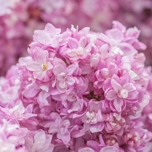 blooming (w/ heepsy)