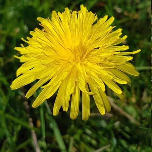 Springtime is Beautiful in England - Glynn Burrows on Big Blend Radio