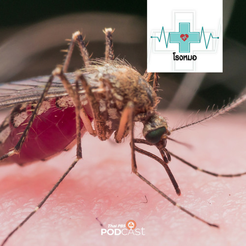 โรงหมอ 2020 EP. 213: โรคไข้เลือดออก