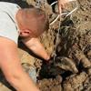 На Одесчине спасают барсука, который застрял в трубе оросительной системы и был парализован