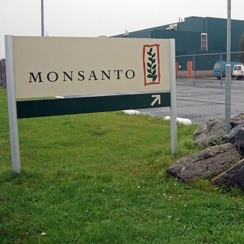 03.31.21 / The Monsanto Papers: An Interview with Carey Gillam